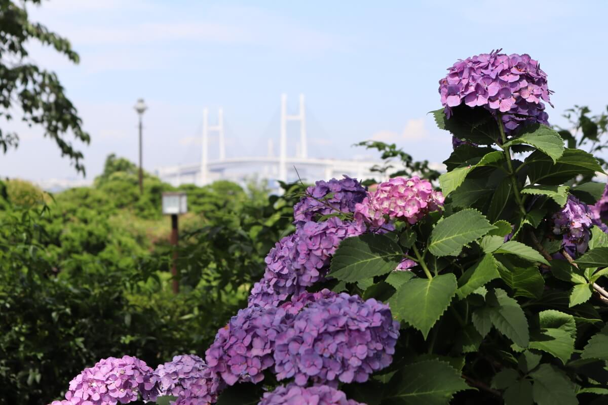 Harbor View Park・Yokohama Bay Bridge-1