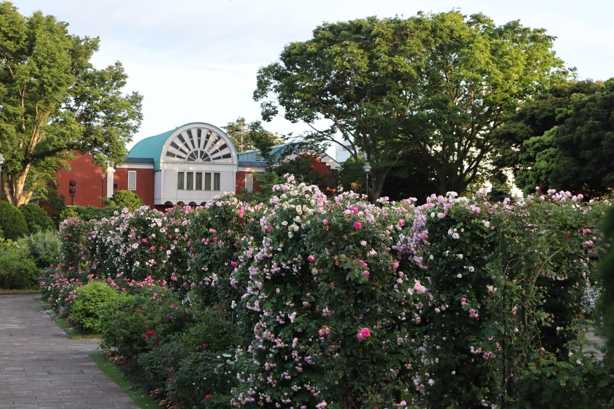 Harbor View Park・rose-1