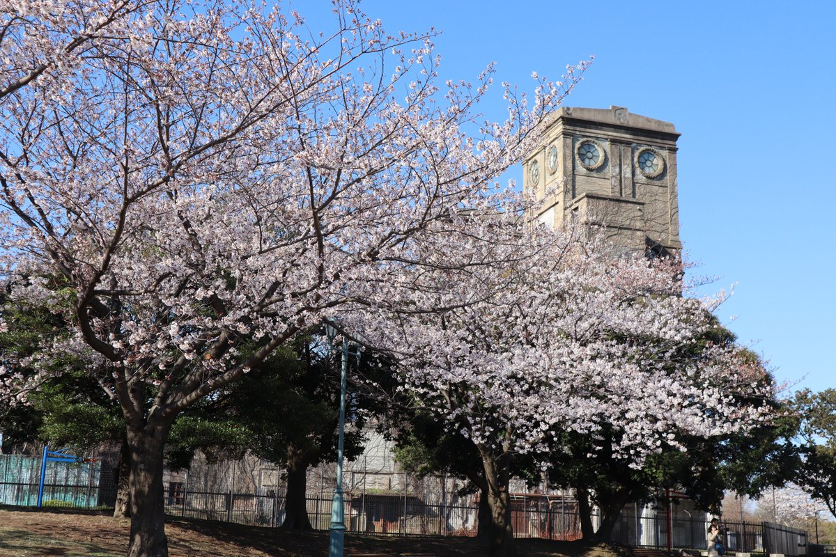 Negishi Forest Park・Cherry blossoms and old racetrack buildinging
