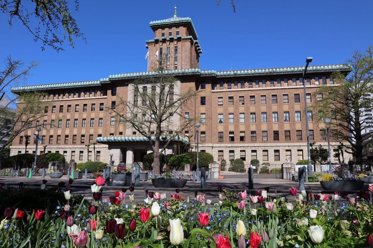 Nihon Oodouri・Kanagawa Prefectural Office Building and tulip-1