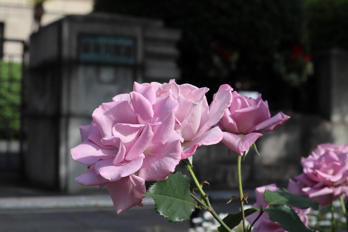 Nihon Oodouri・Rose and Garden Market-2