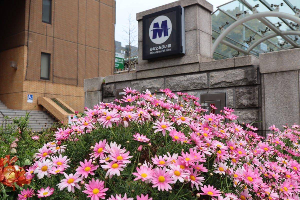 Nihon Oodouri・Flower(Senetti) and subway station entrance-1