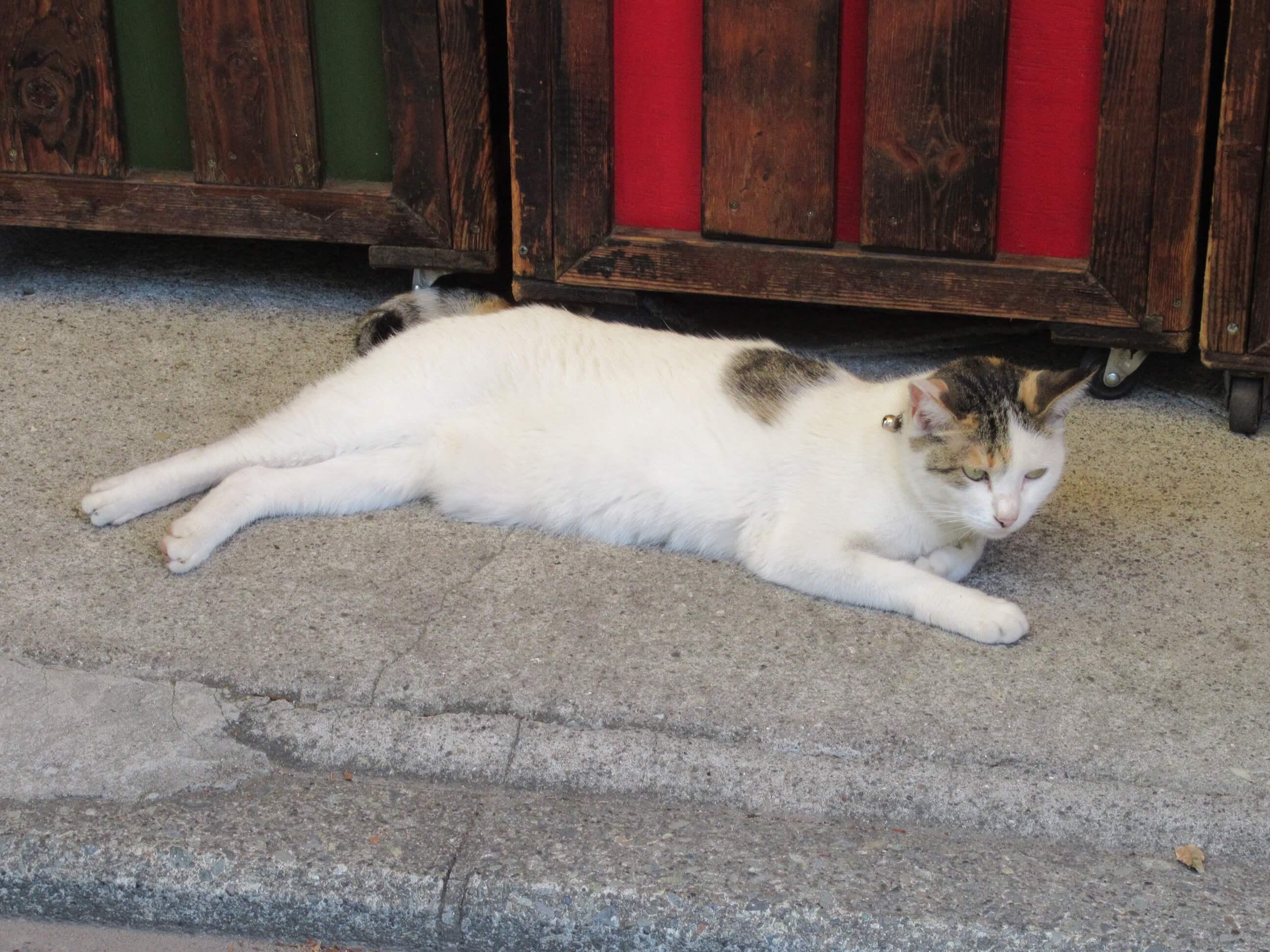 猫・三渓園近くで撮影