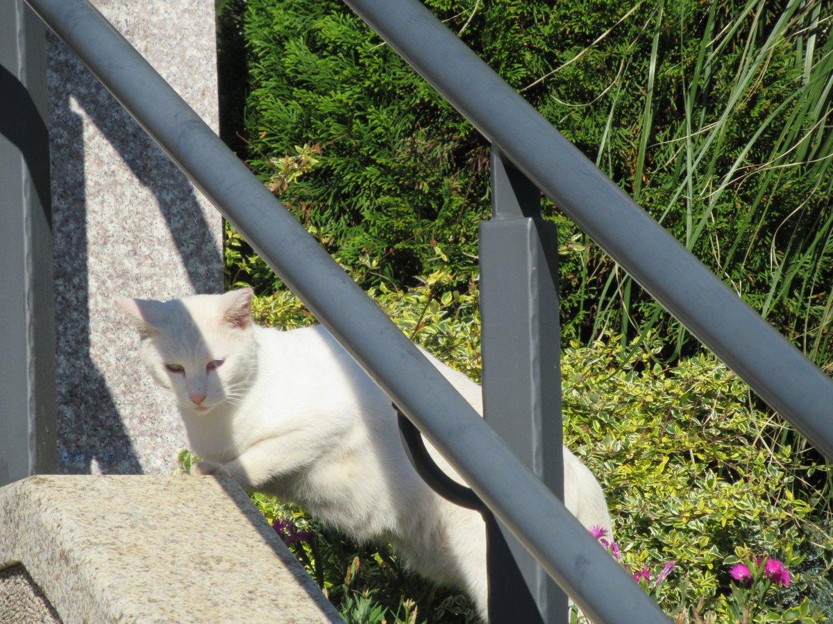 猫・港の見える丘公園近くで撮影