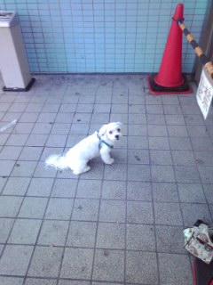 横浜で撮影した犬