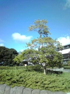 海の公園横浜青空と木