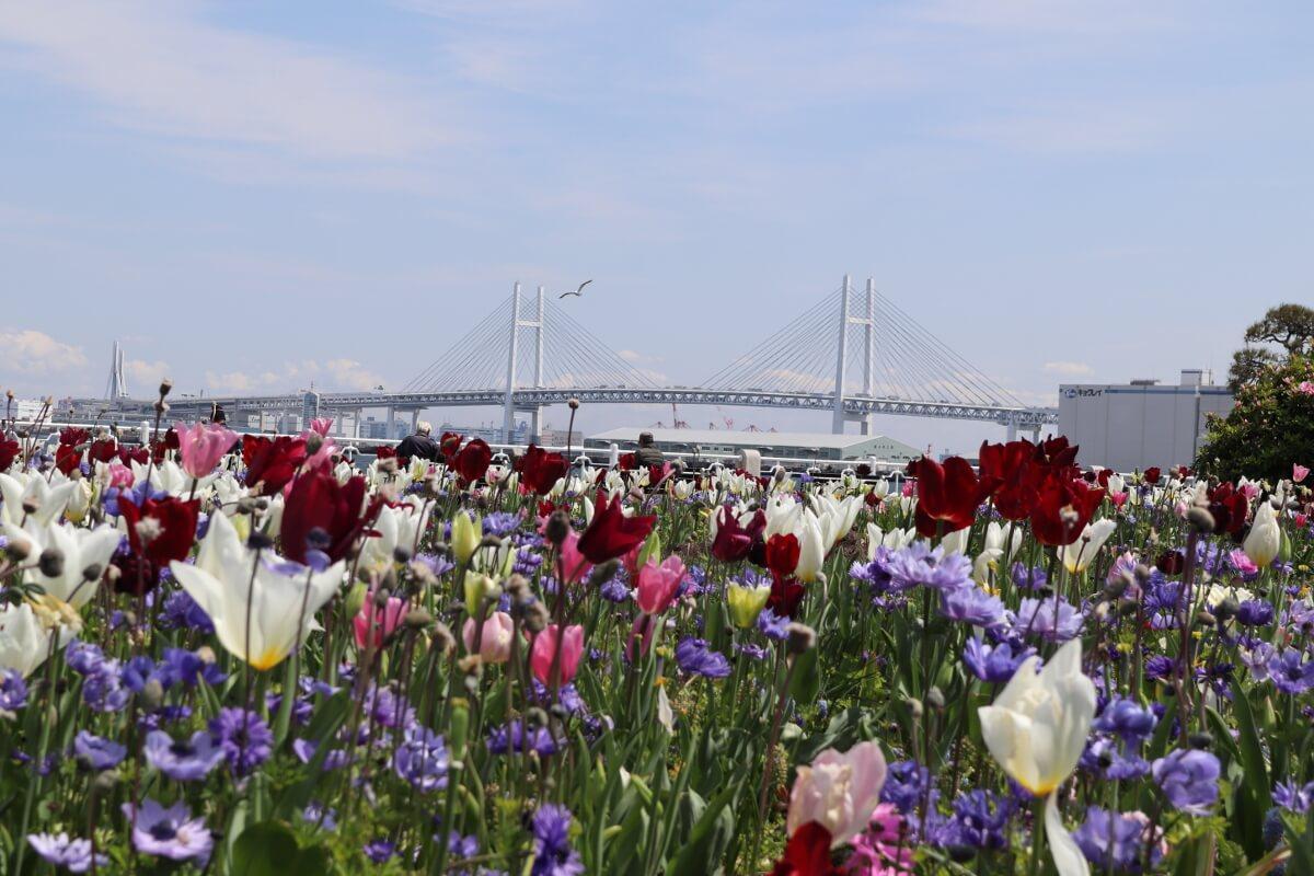 Yokohama Bay Bridge・Yamashita-park