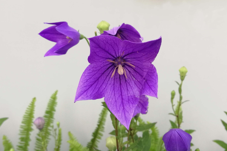 bell flower-1