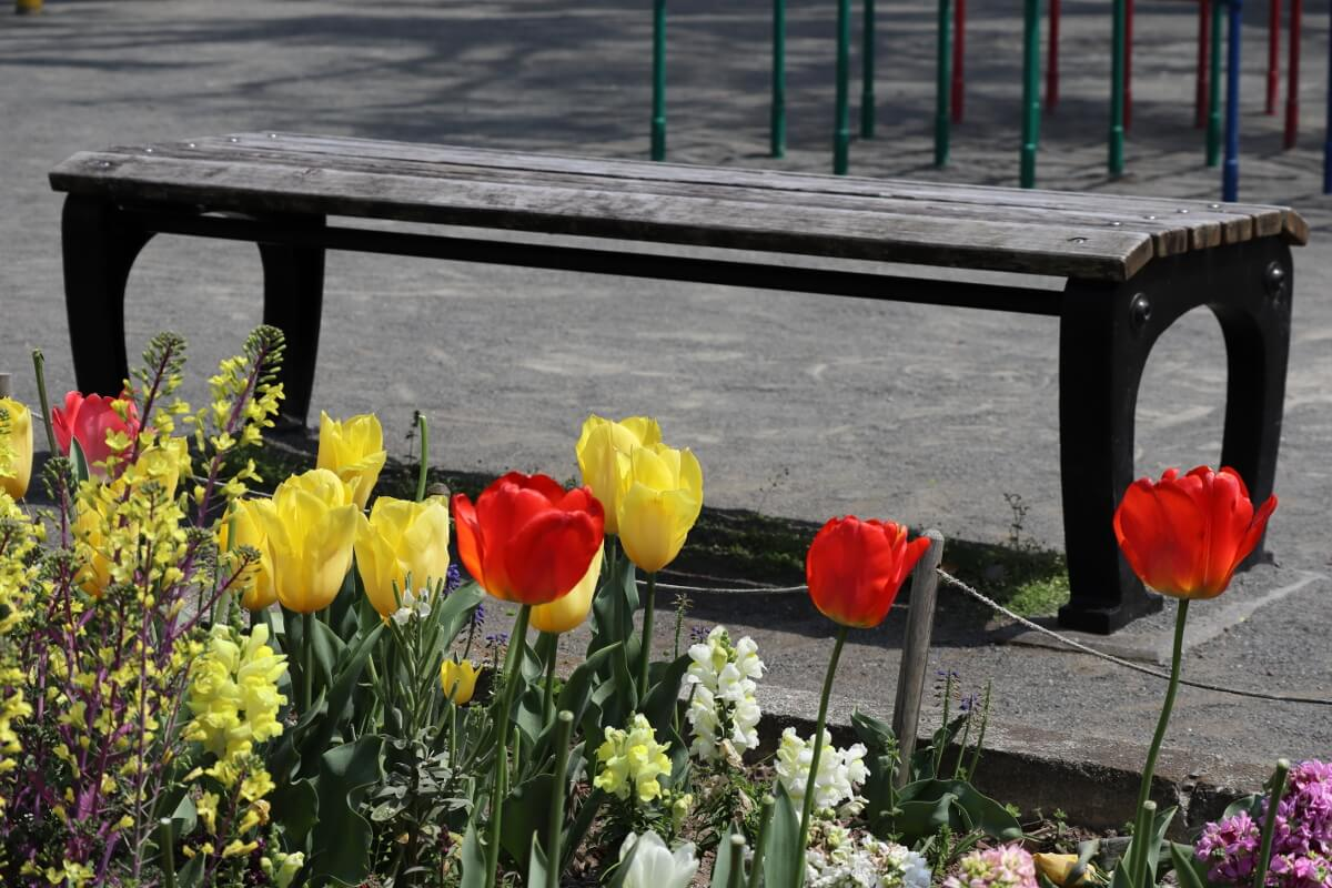 tulips-3・bench