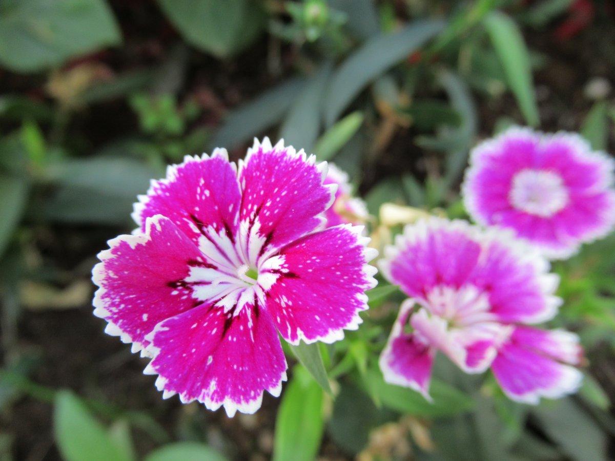 東京で撮影した花5