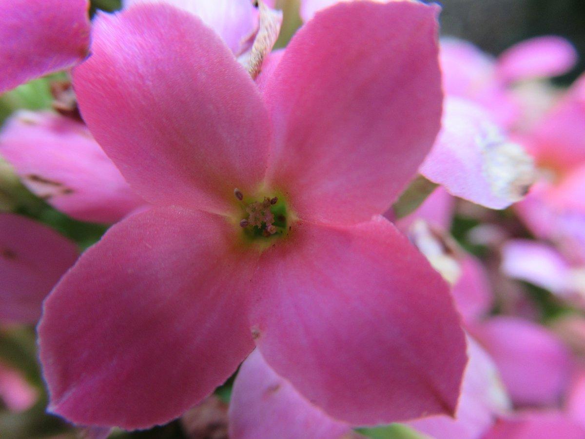 東京で撮影した花12