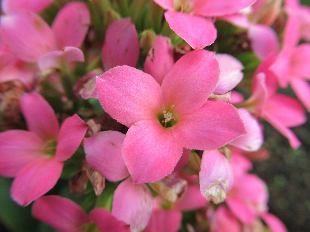 東京で撮影した花13