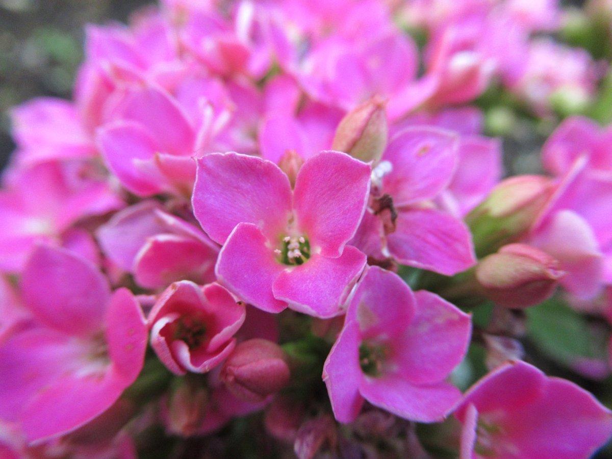 東京で撮影した花17