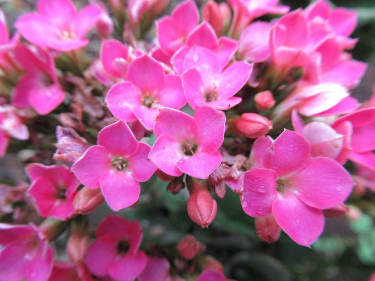 東京で撮影した花19