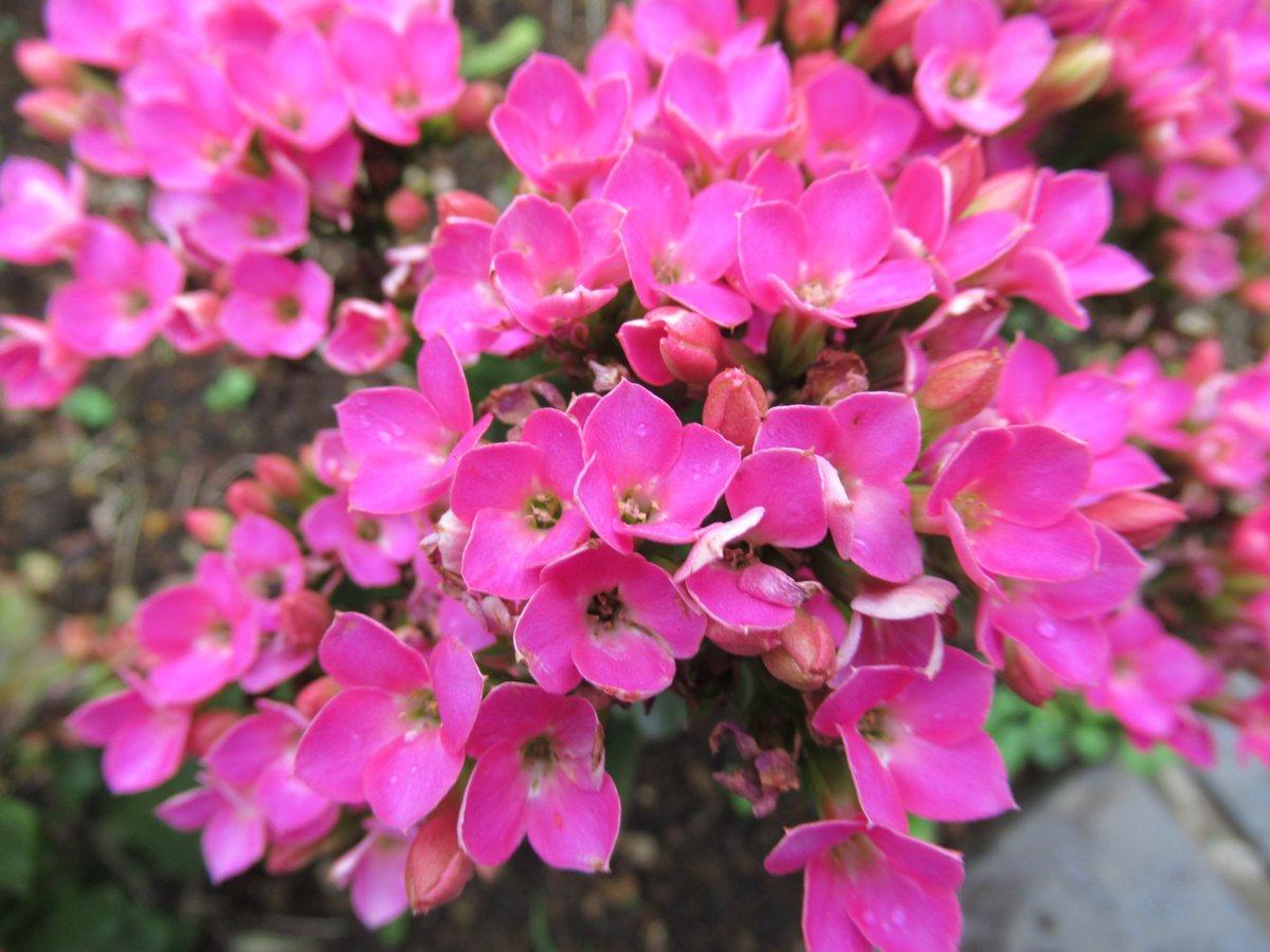 東京で撮影した花22