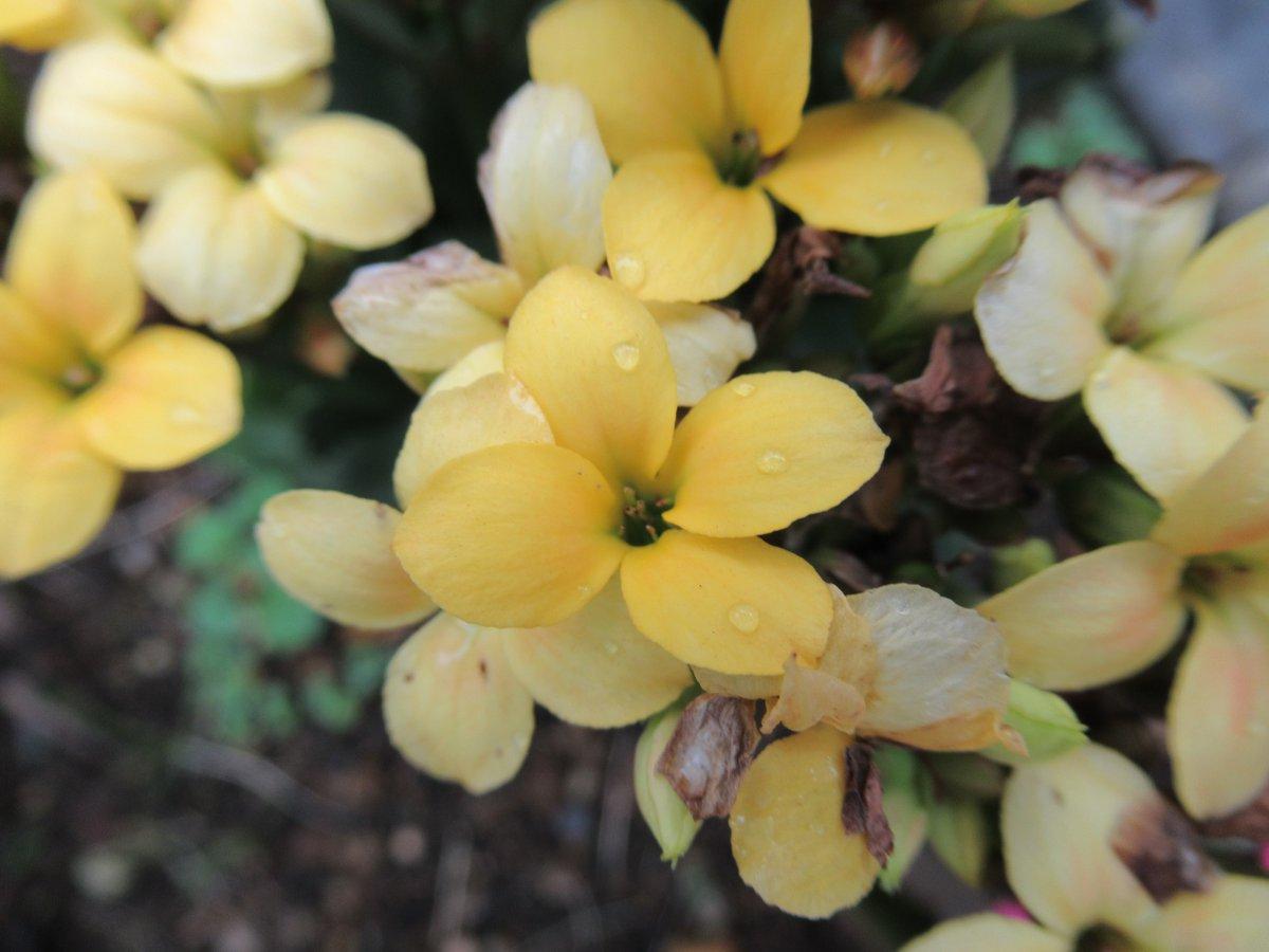 東京で撮影した花24