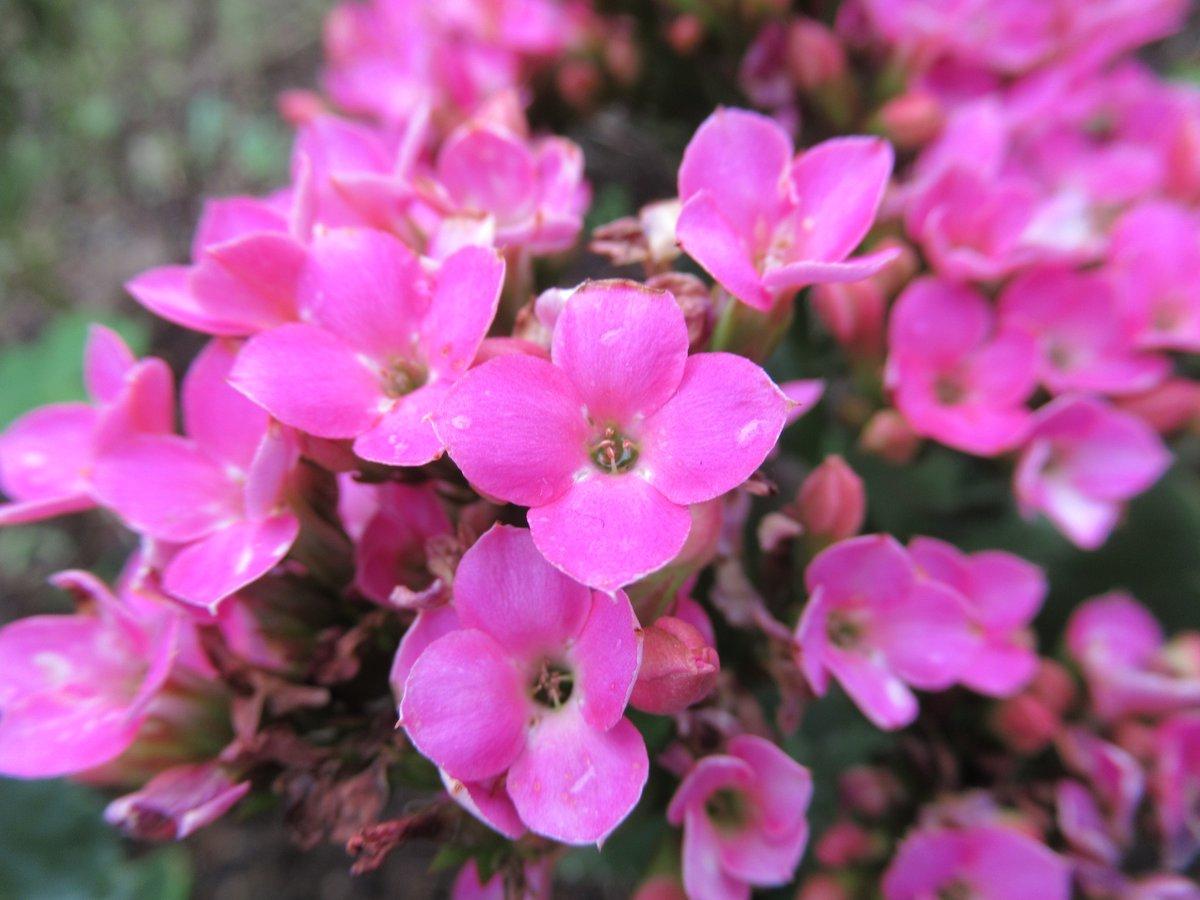 東京で撮影した花27