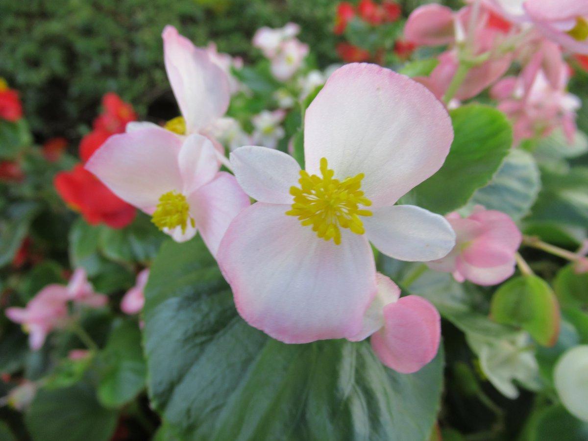 東京で撮影した花29