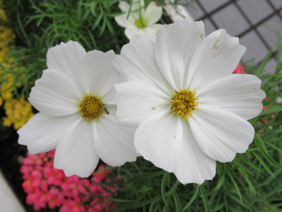 東京で撮影した花33