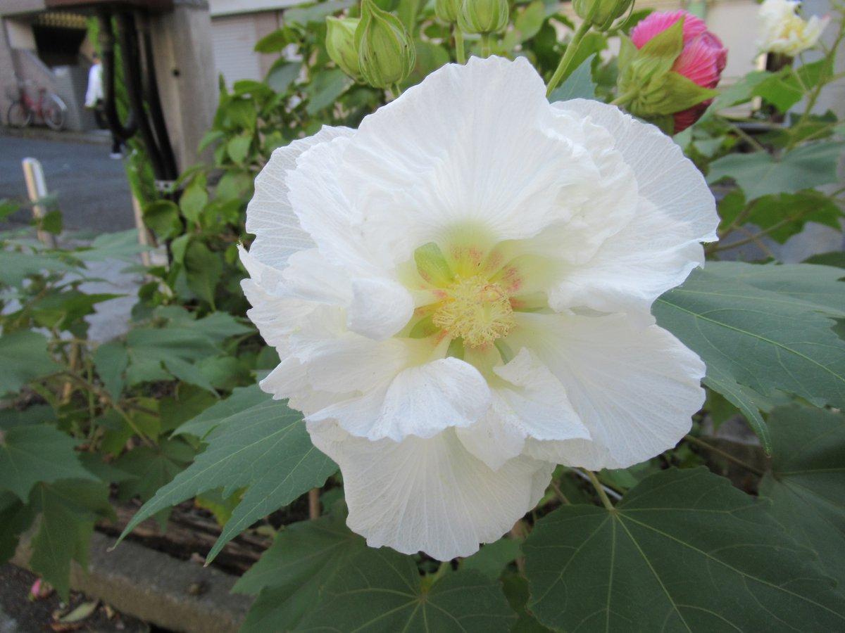 横浜で撮影した花2