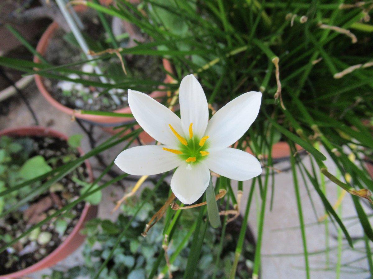 横浜で撮影した花5