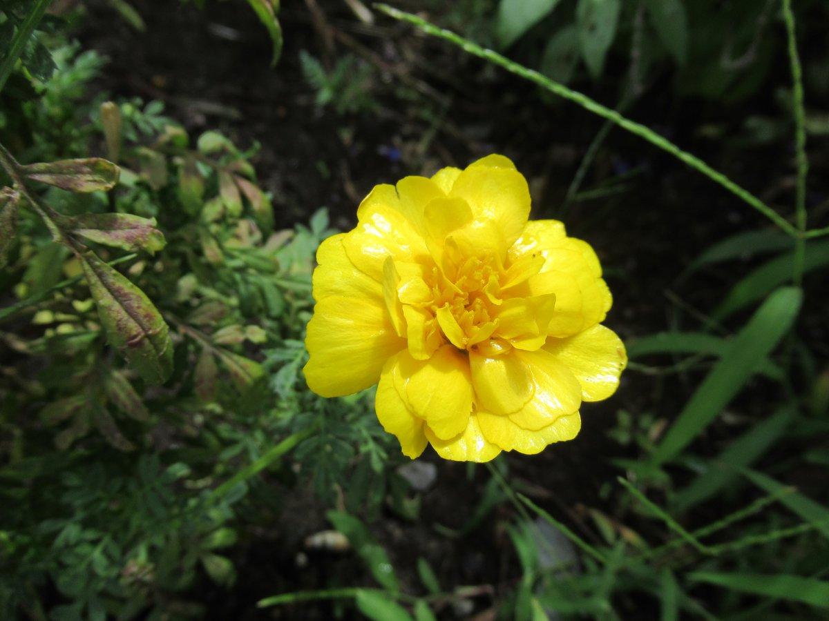 横浜で撮影した花7