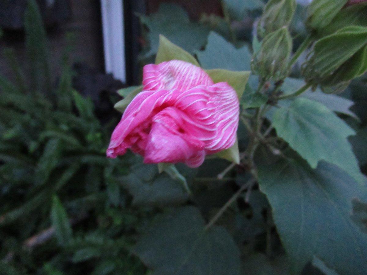 横浜で撮影した花10