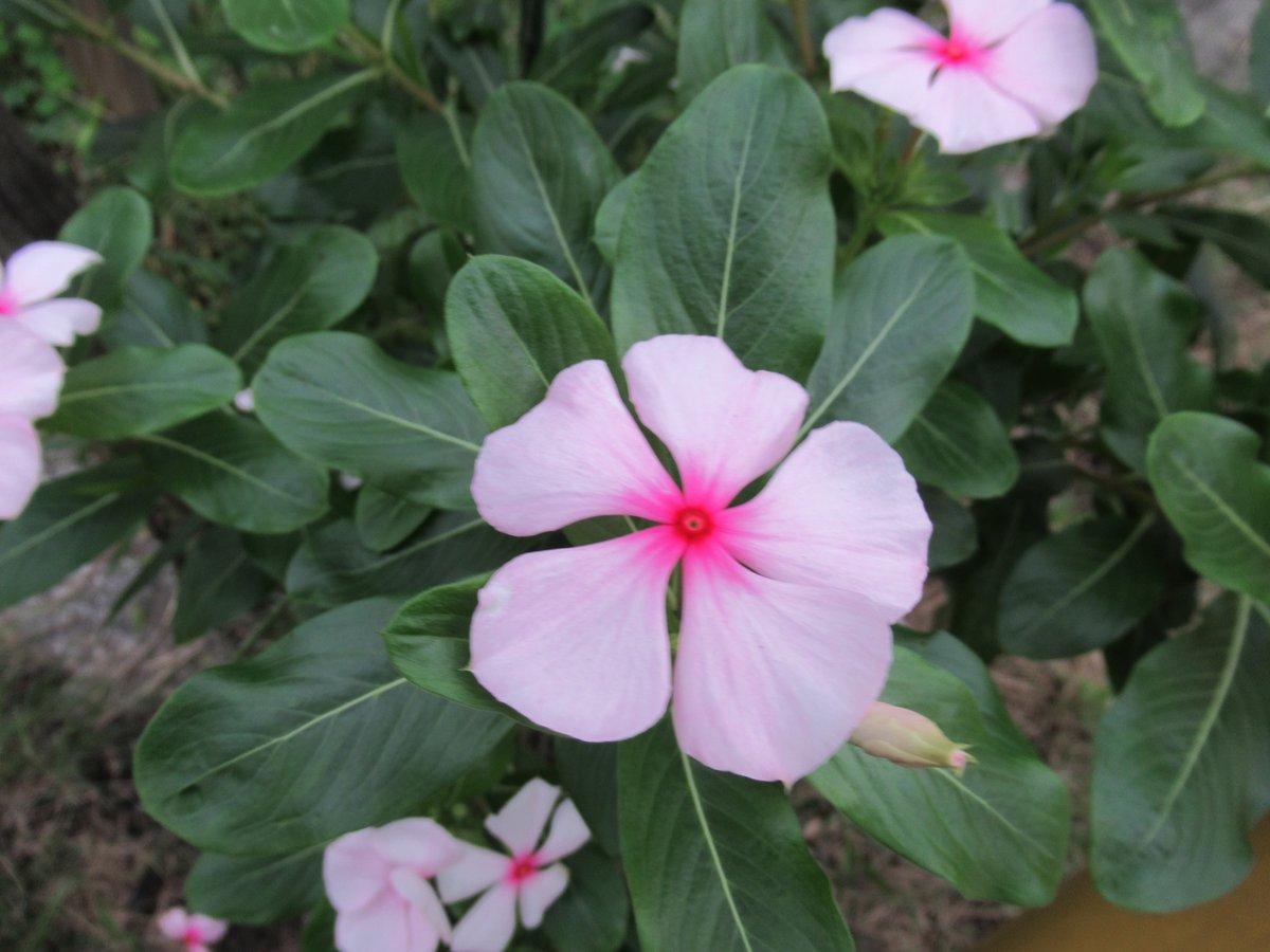 横浜で撮影した花12