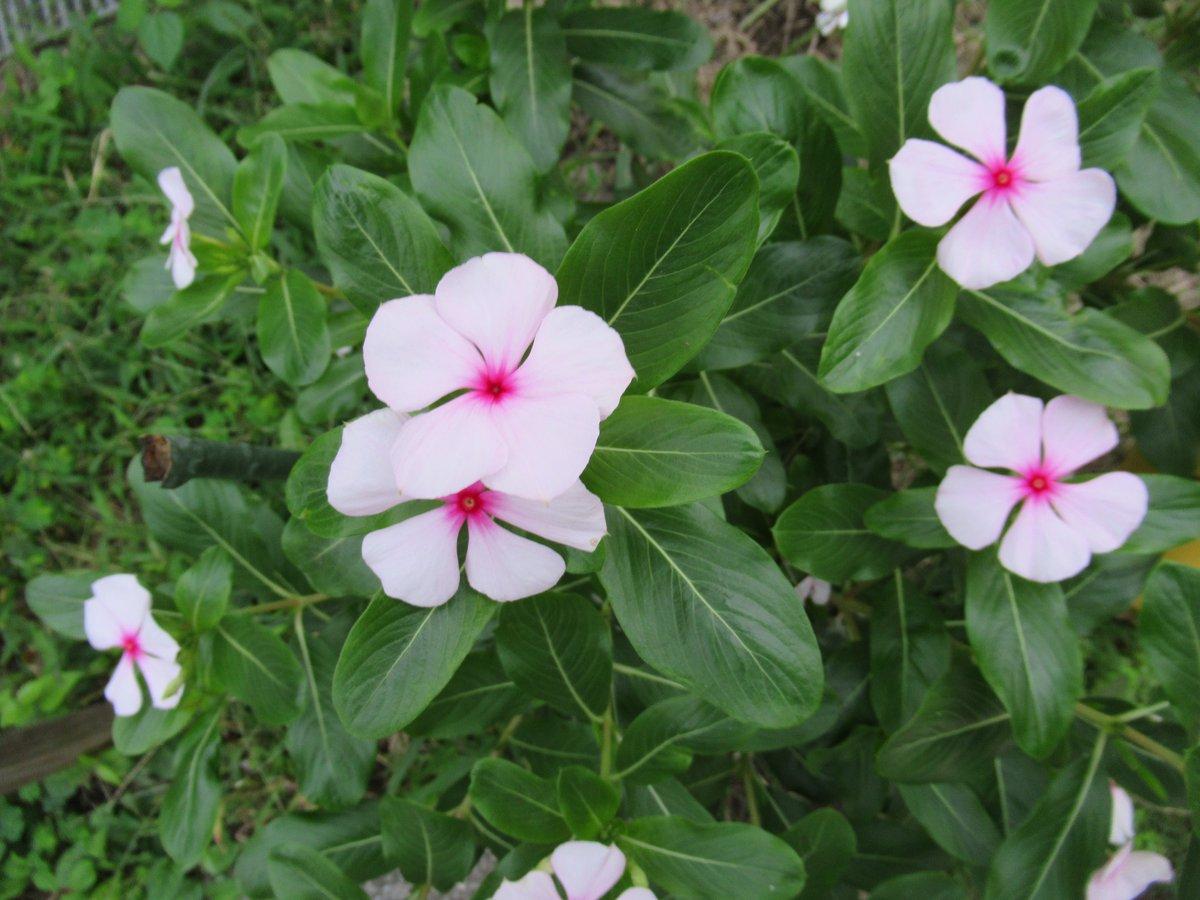横浜で撮影した花13