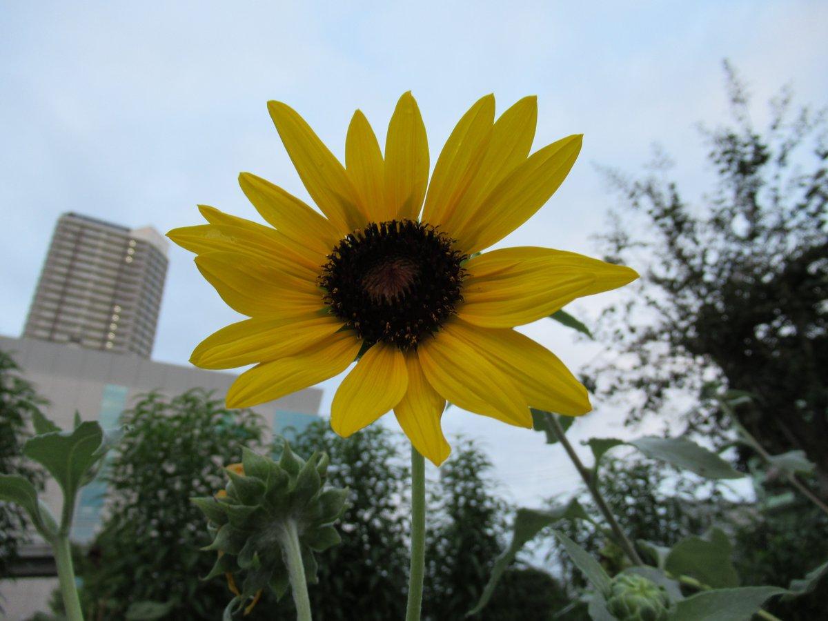 横浜で撮影した花21