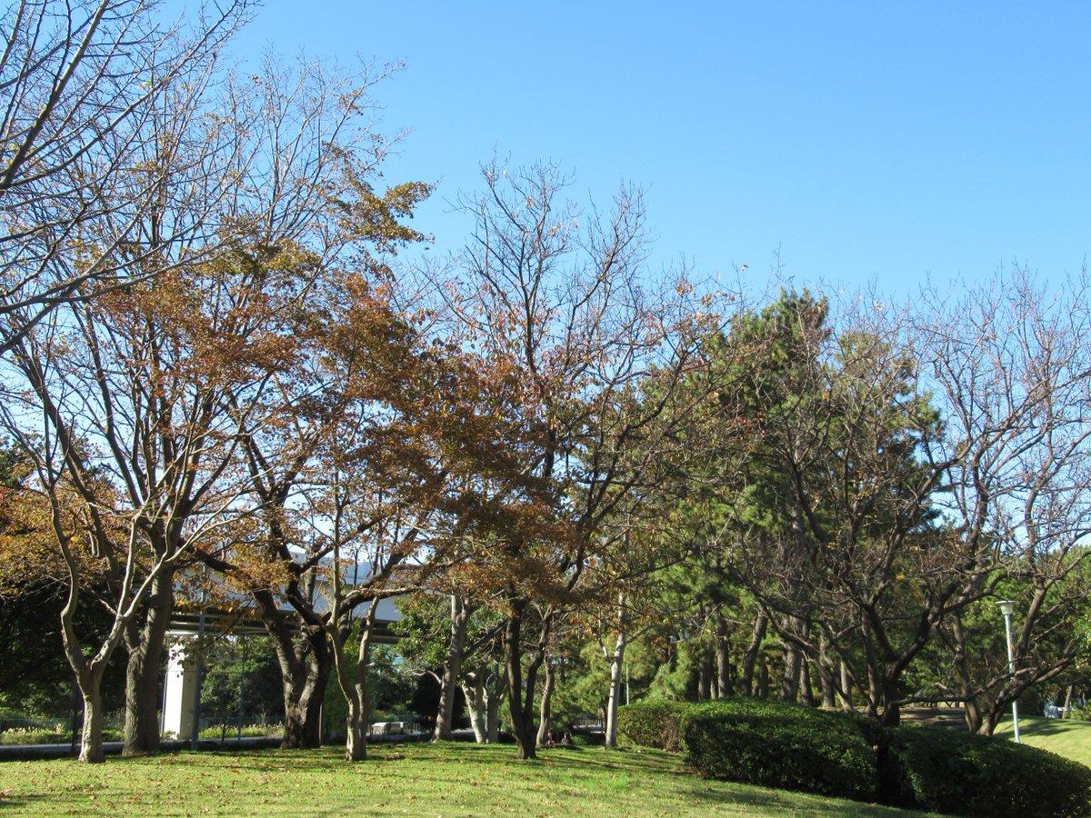 Honmoku City (Honmokushimin) Park-3