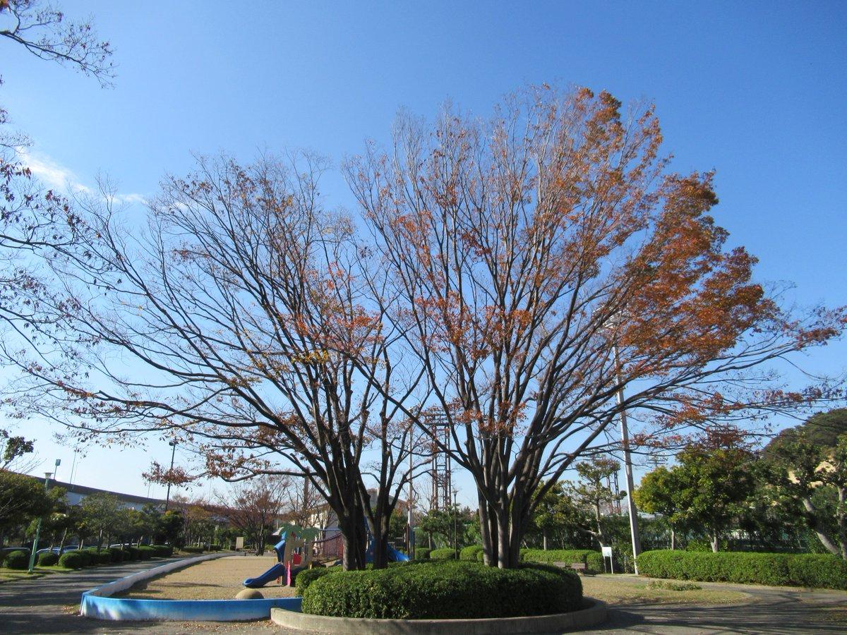 Honmoku City (Honmokushimin) Park・Autumn leaves