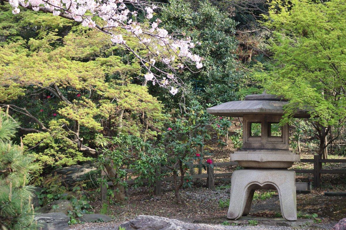 Kamonyama Park・Cherry Blossoms-3