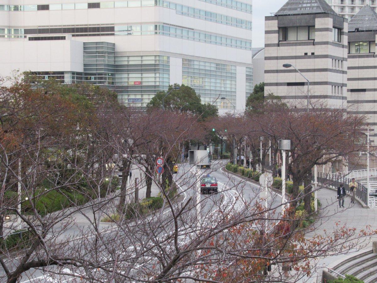 Landmark Plaza・Autumn leaves of Sakura Dori