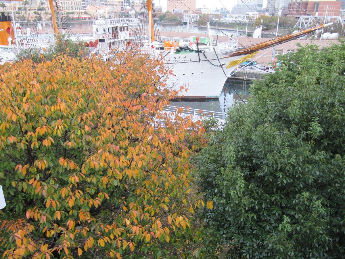 Nihonmaru・autumn leaves