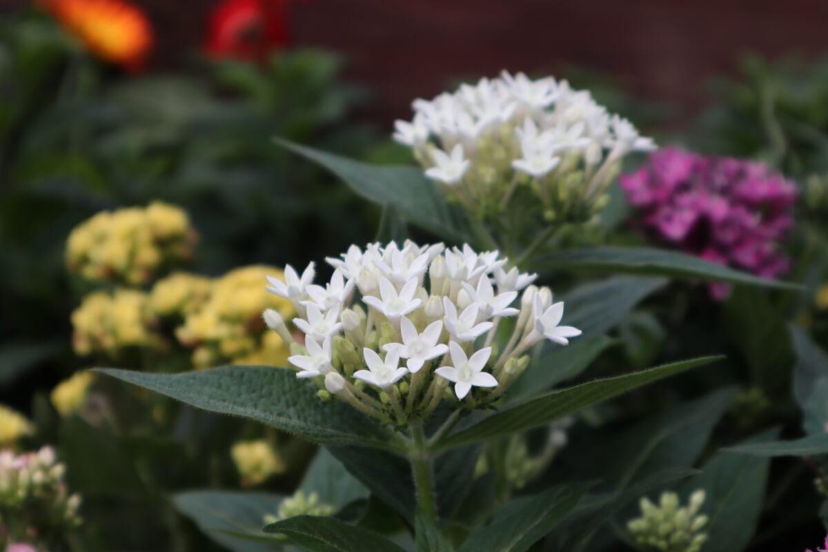 Pacifico Yokohama・flower-1