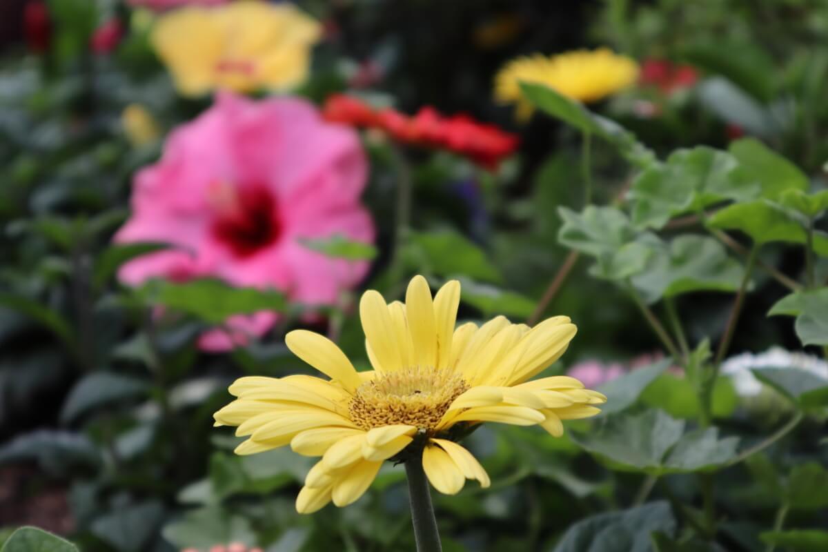 Pacifico Yokohama・flower-2