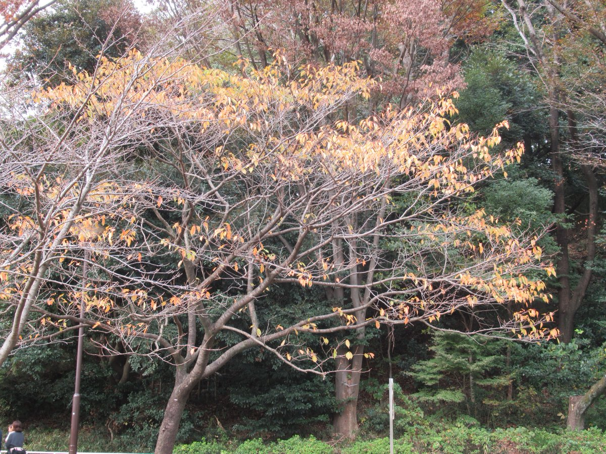Mitsuike Park・Near North Gate・Autumn leaves2