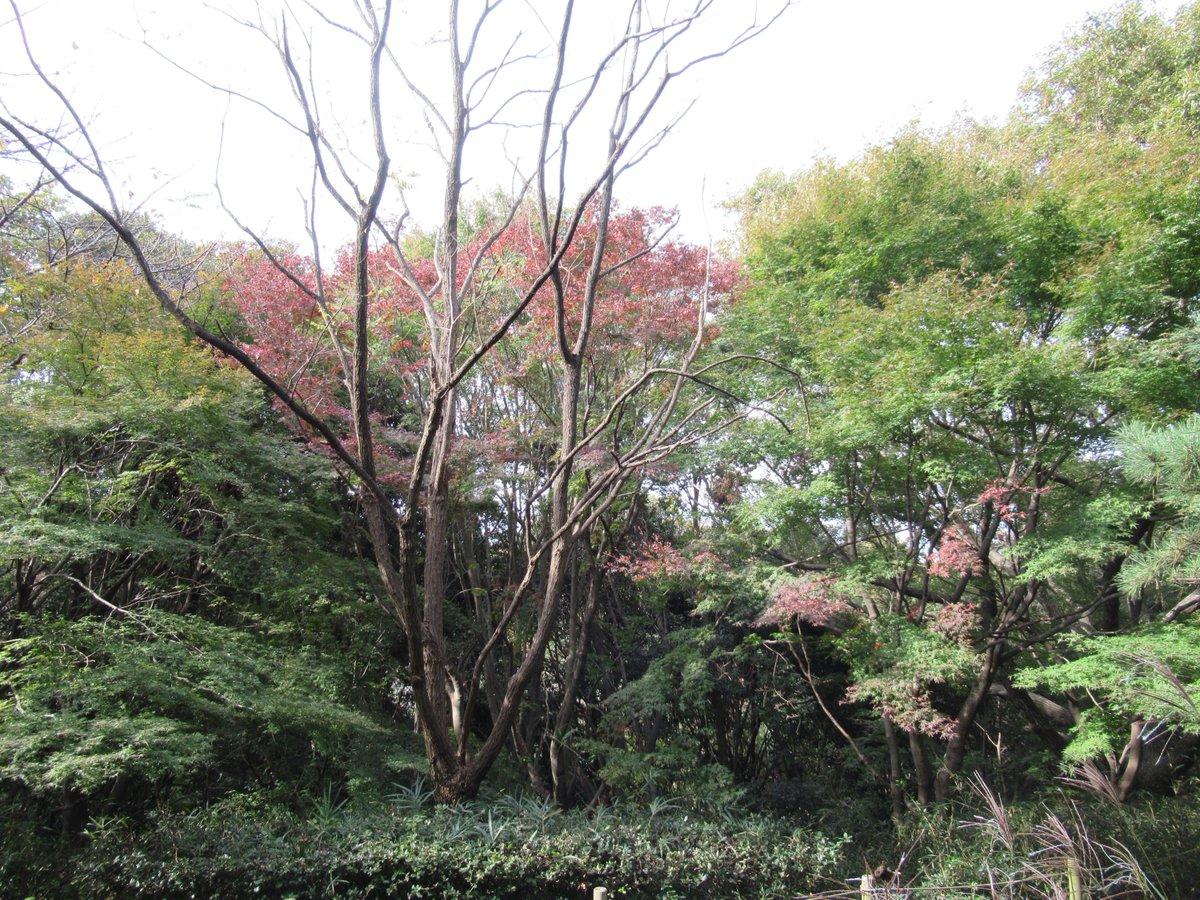 Adventure forest・Autumn leaves1