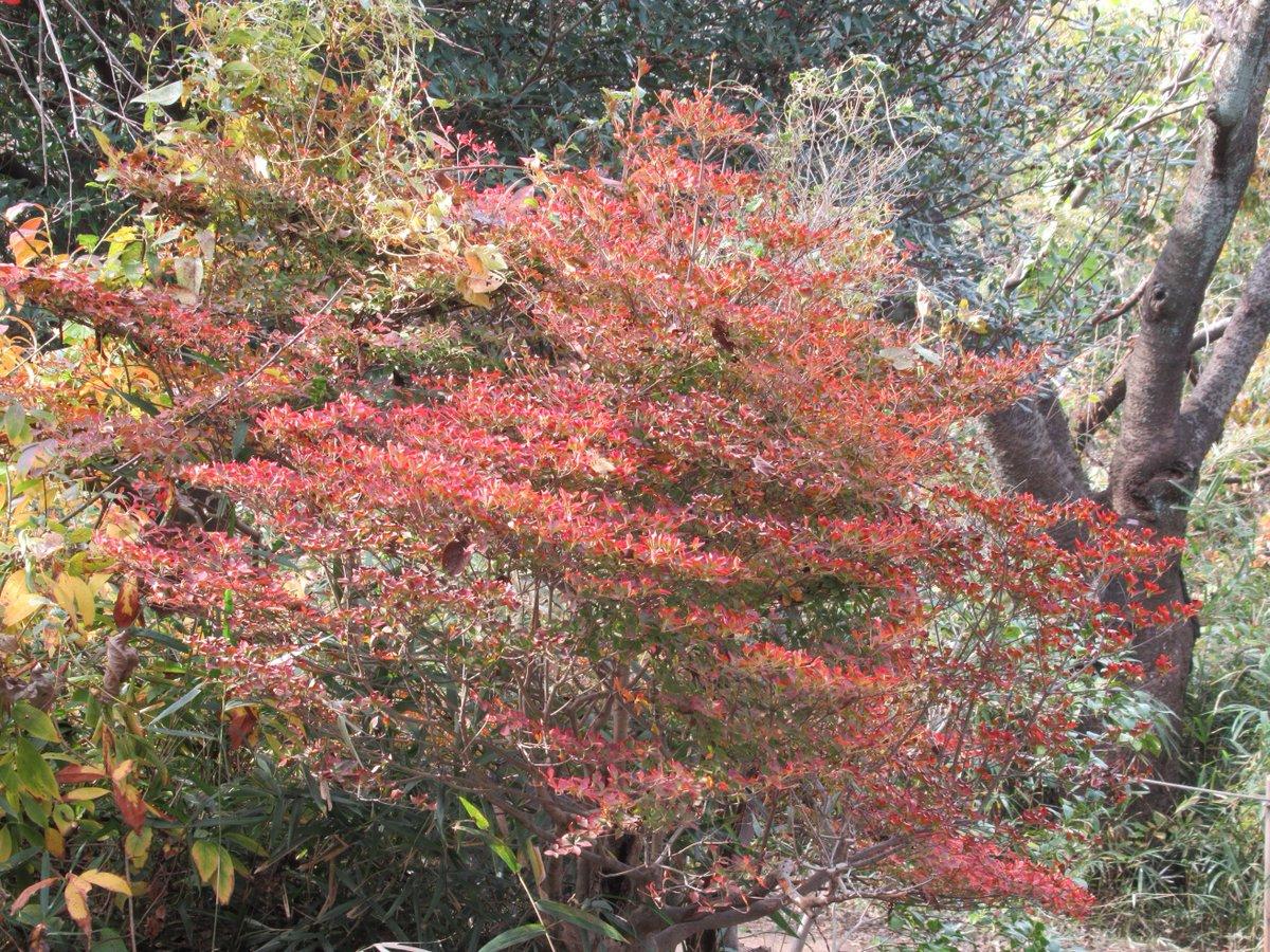 Adventure forest・Autumn leaves2