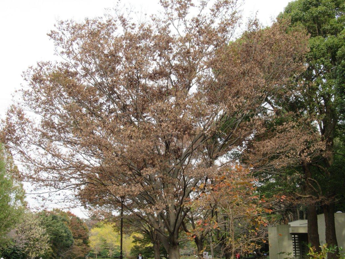 Adventure forest・Autumn leaves3
