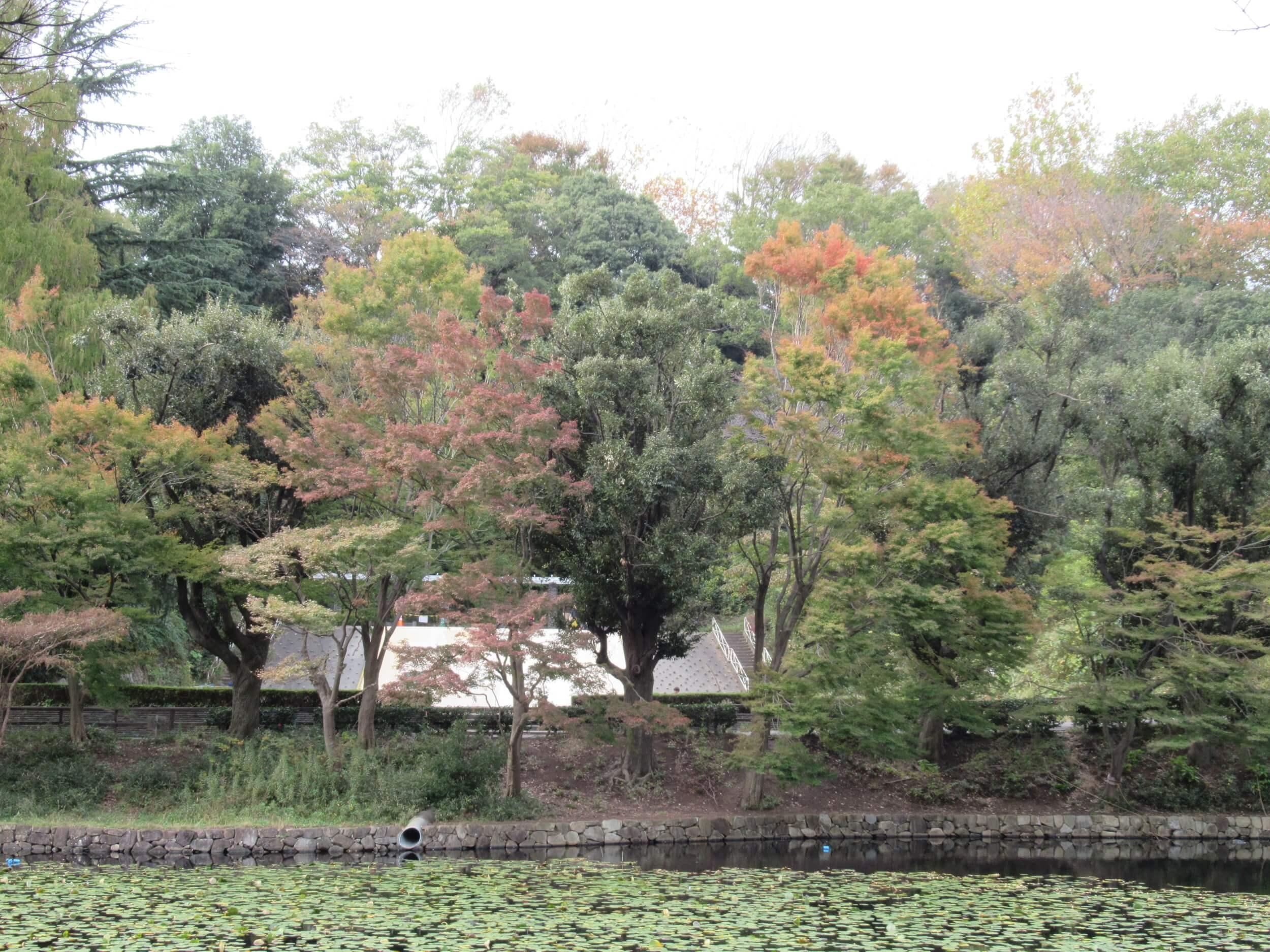 Kaminoike(Upper pond)・Autumn leaves4