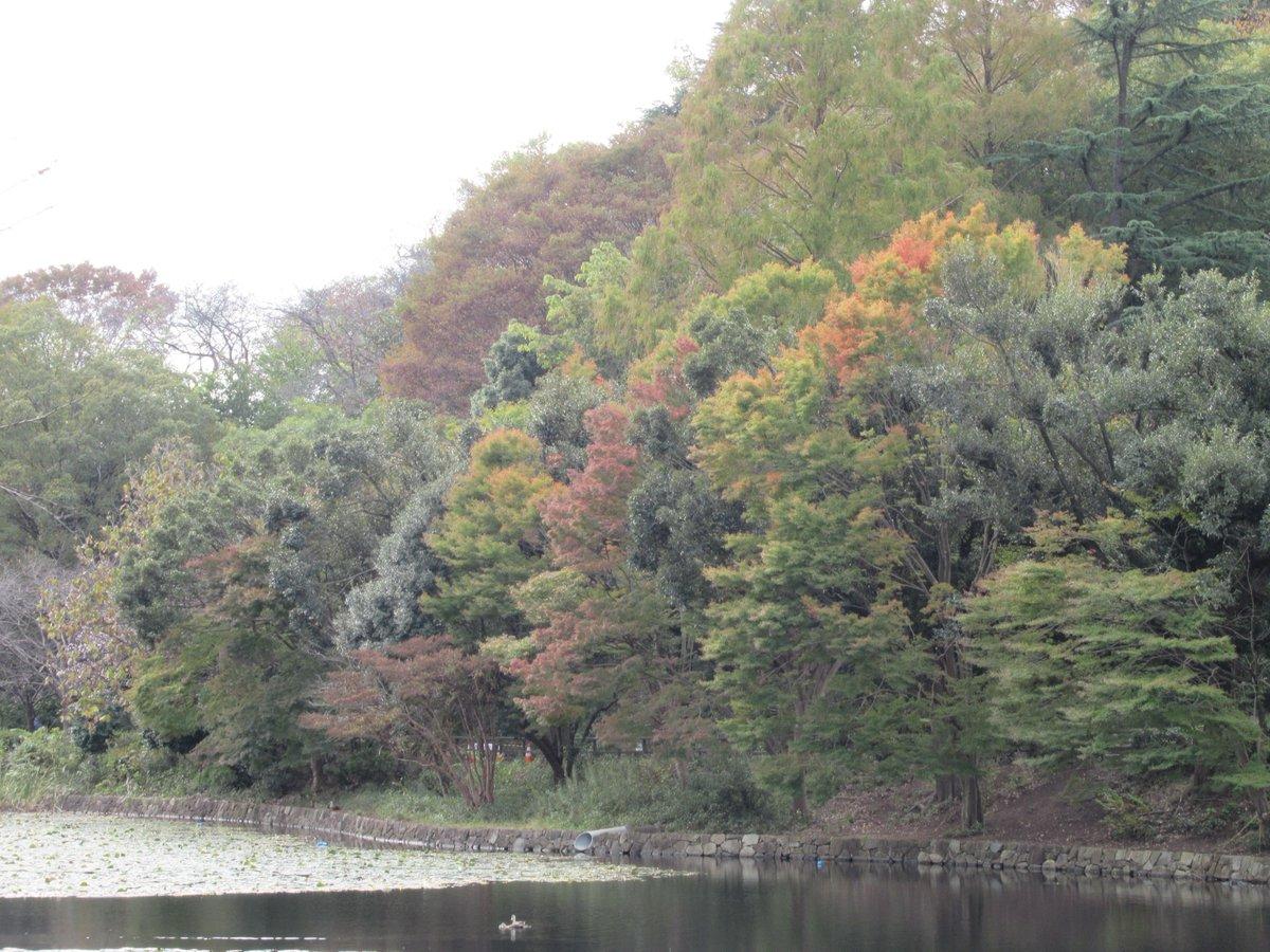 Nakanoike(Middle pond)・Autumn leaves1