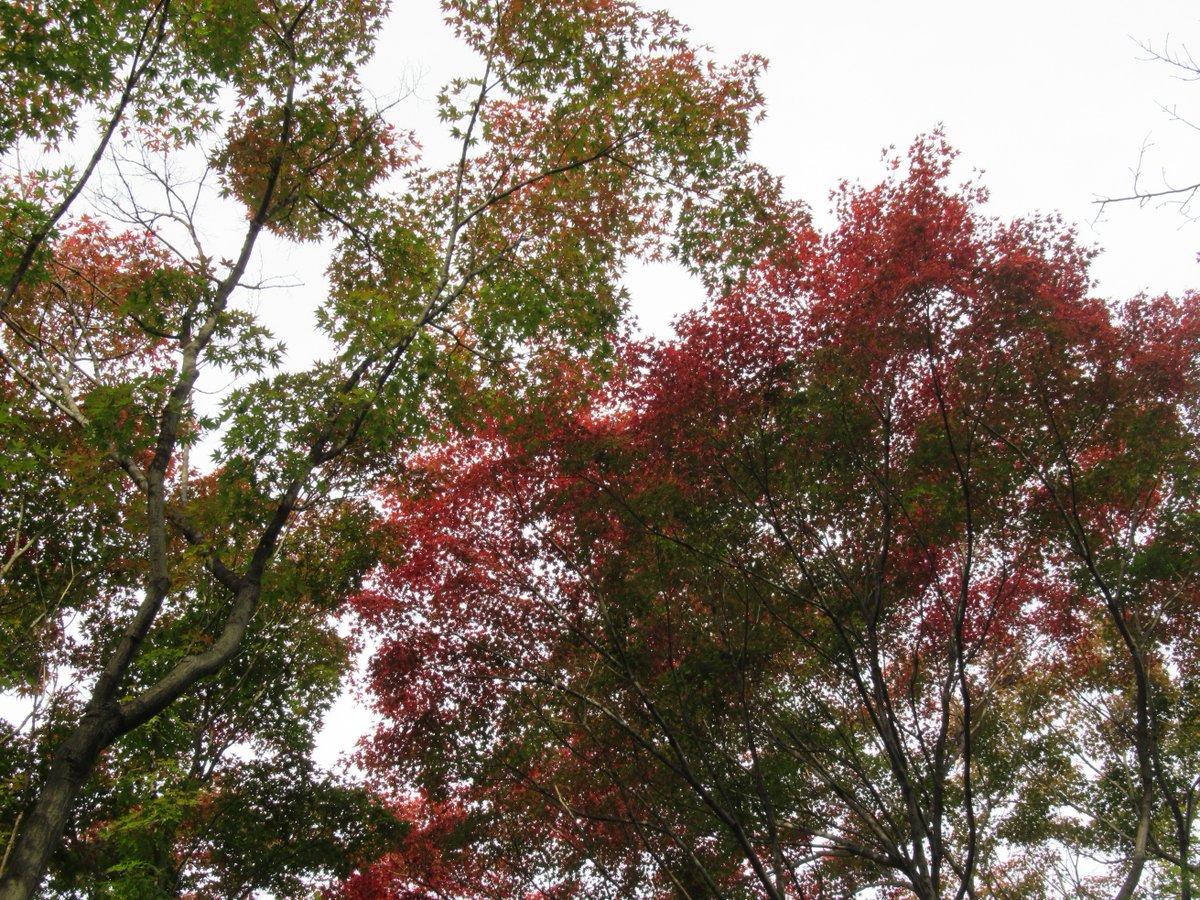 Nakanoike(Middle pond)・Autumn leaves2