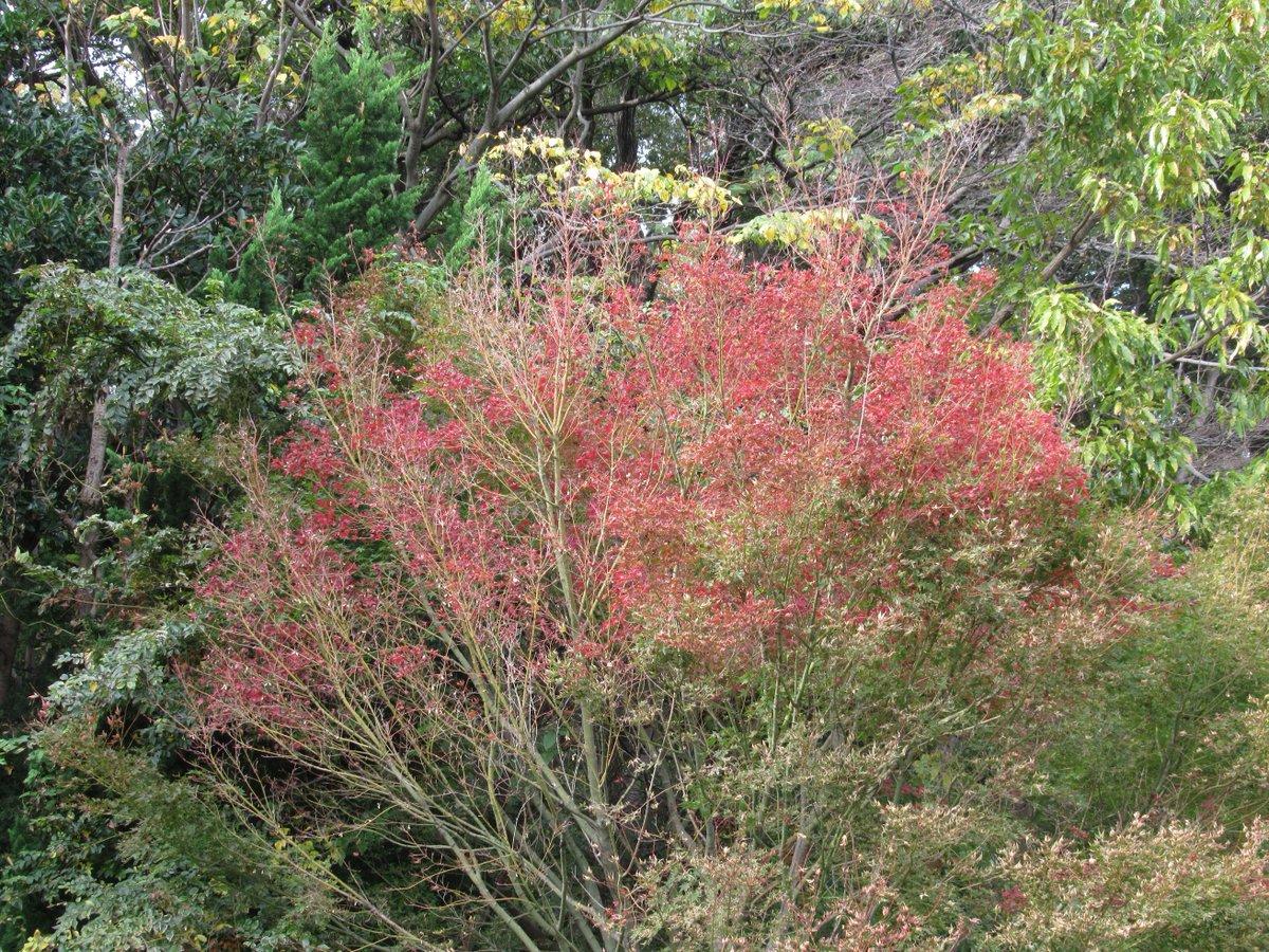 Shimonoike(Lower pond)・Autumn leaves