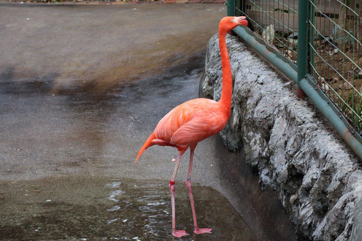 Nogeyamazoo・Flamingo