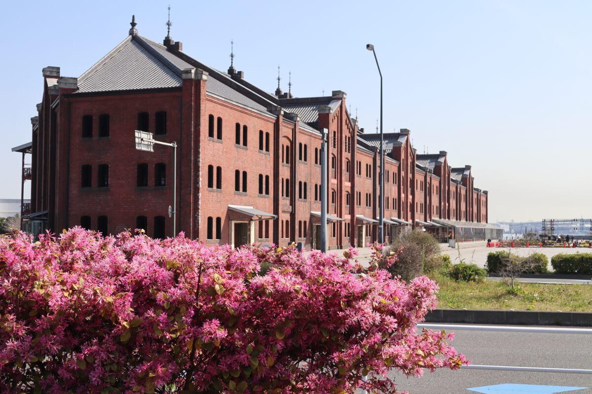 Red Brick Warehouse・flower