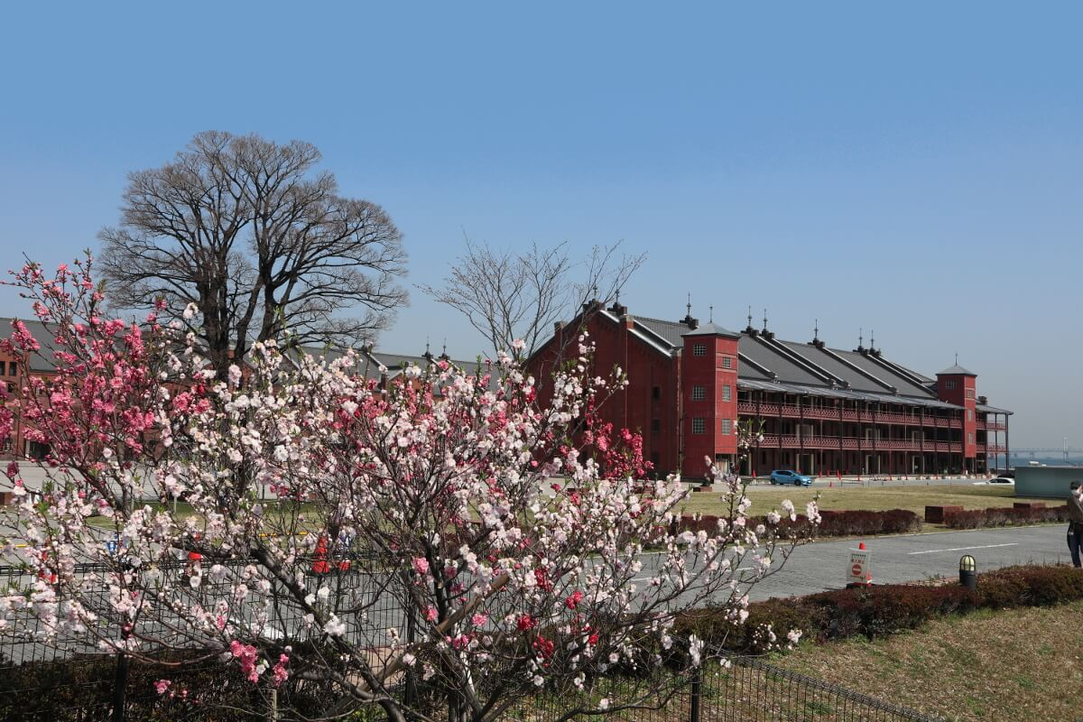 Red Brick Warehouse・Cherry Blossoms2