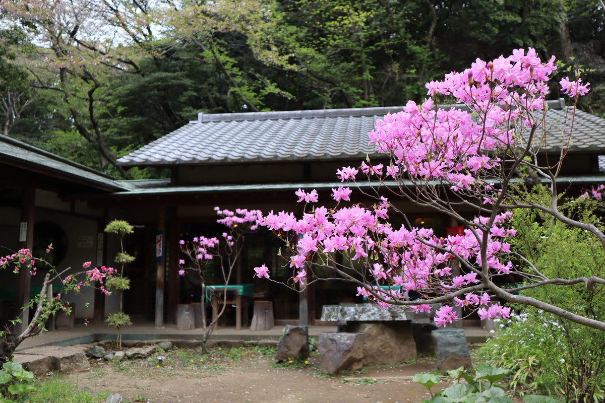 Yokohama Sankei Garden・Flowers and building