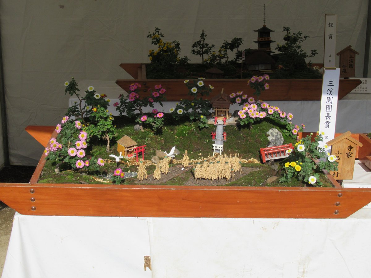 Small Chrysanthemum bonsai & Chrysanthemum Exhibition in Yokohama Sankeien Garden.Director's Award.Teramachi Furusatomura